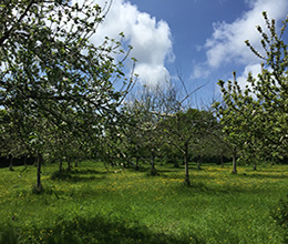 Small - The Elms - Orchard