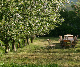 Trinity Cider Apple Orchard